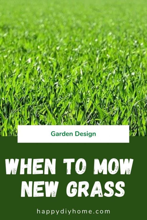 When to mow new grass 1