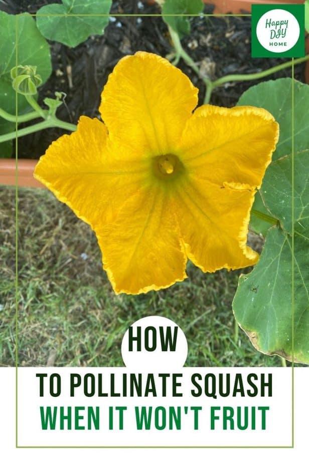 pollinate squash 1