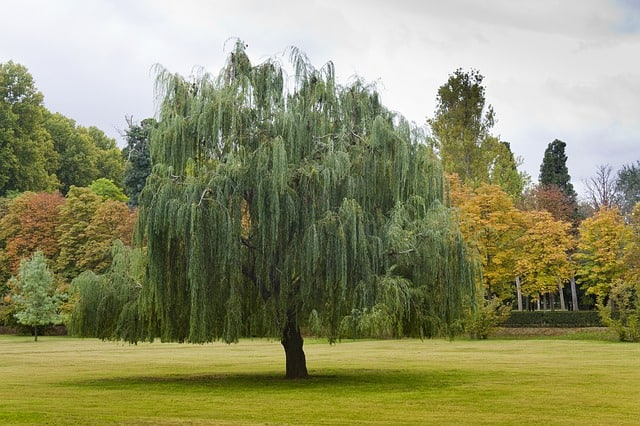 2 Willows provide soft structure