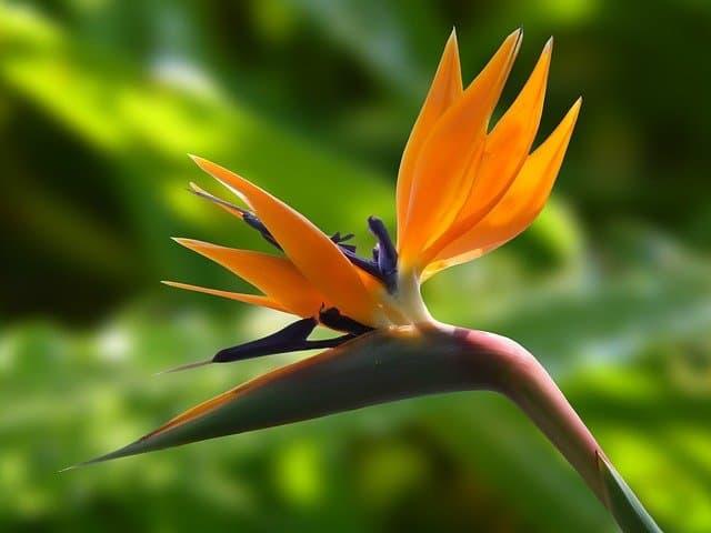 23 Bird of Paradise