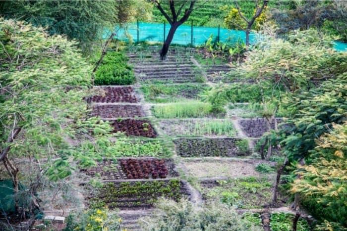 5. community garden in India