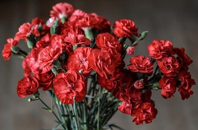8 Carnation