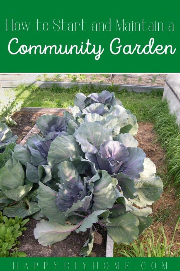 How to Start a Community garden green