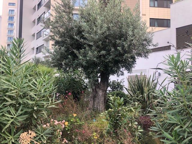 Olive Tree Meadow Garden