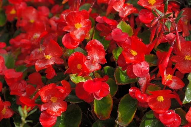 11 Heavy flowering varieties