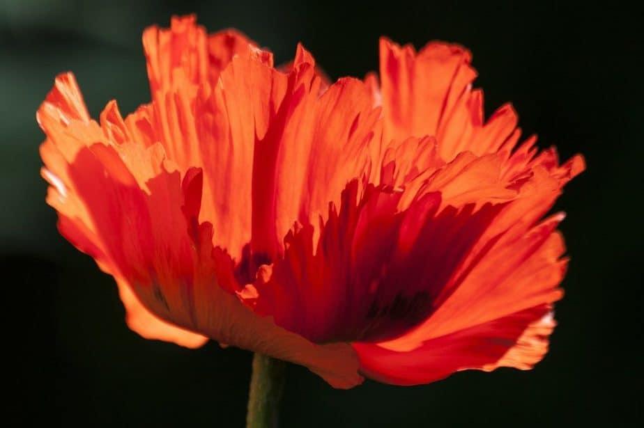 11. Petals