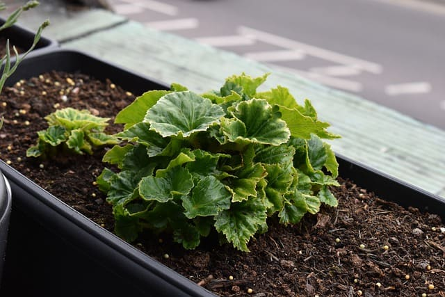 13 Plant in well draining soil