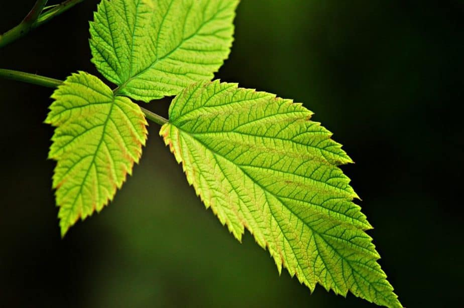 16. Photosynthesis leaves