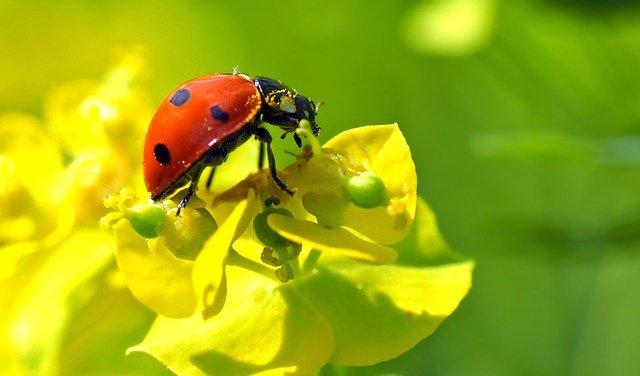 3 Pollen is part of diet