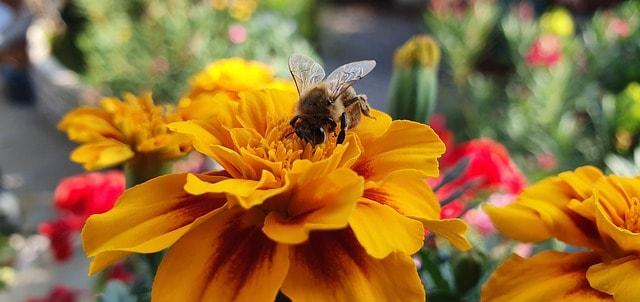 6 Popular with pollinators