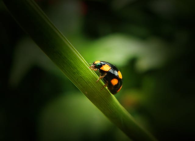 9 Ladybugs come in many colors