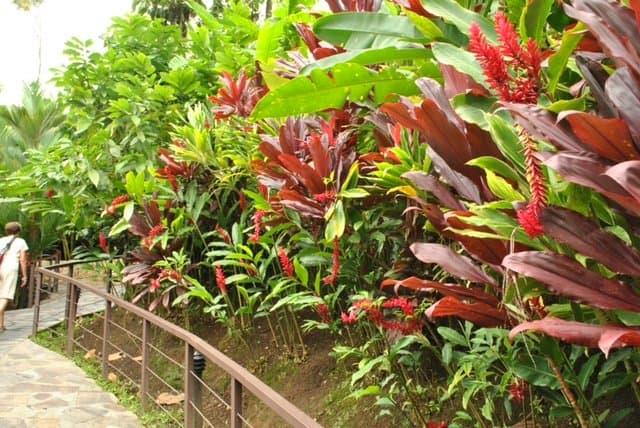 Contrasting colorful foliage