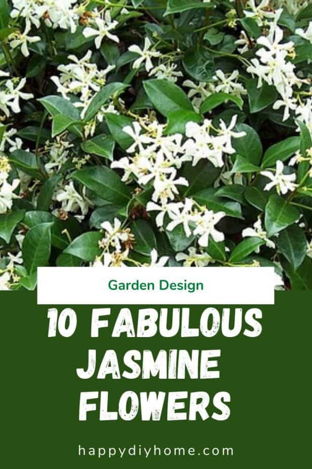 Jasmine Flowers 1