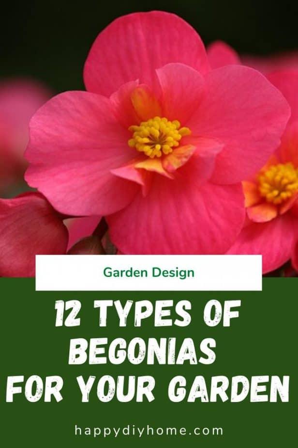 Types of begonias 1