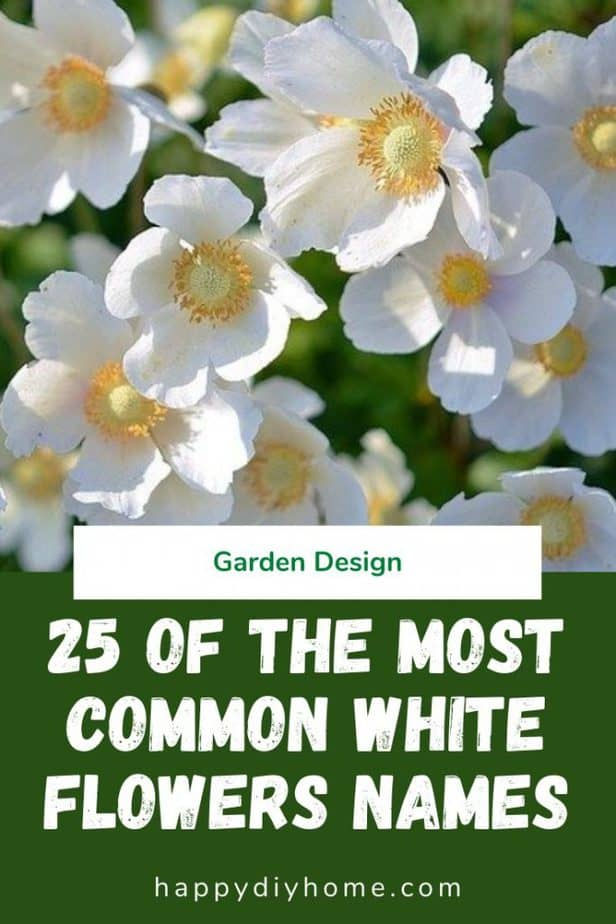 White Flowers Names 1