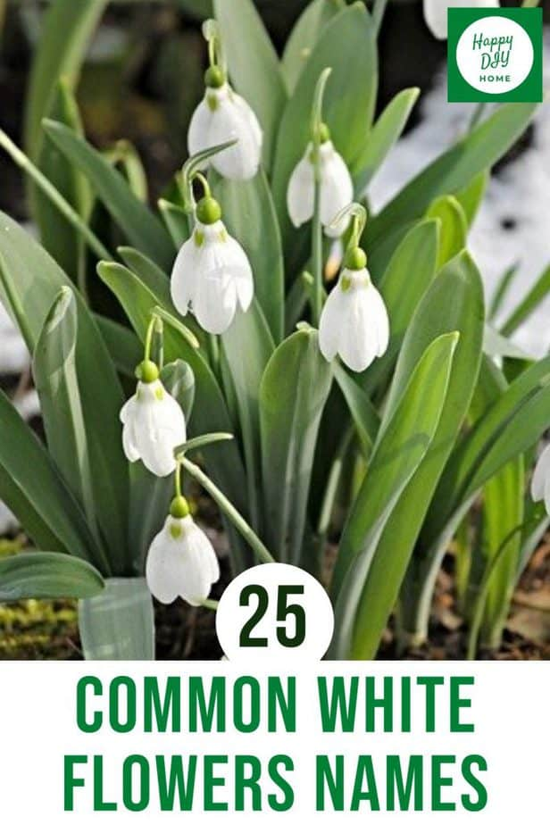 White Flowers Names 2