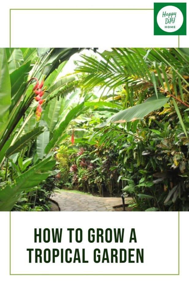 how to grow a tropical garden 1