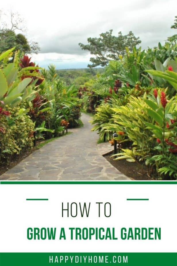 how to grow a tropical garden 2