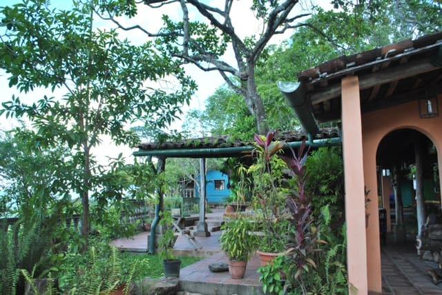 informal tropical garden