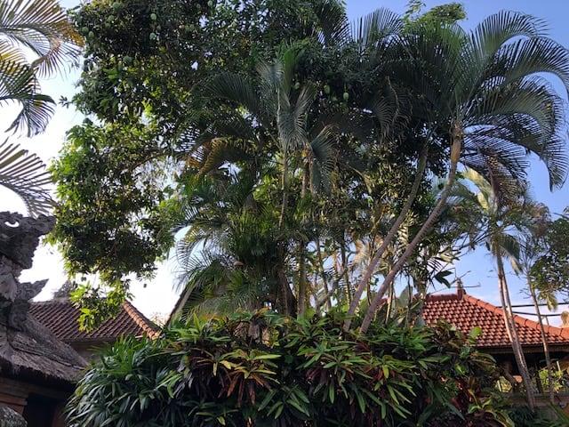 mango coconut canopy